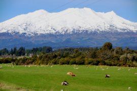 горящий тур в новую зеландию