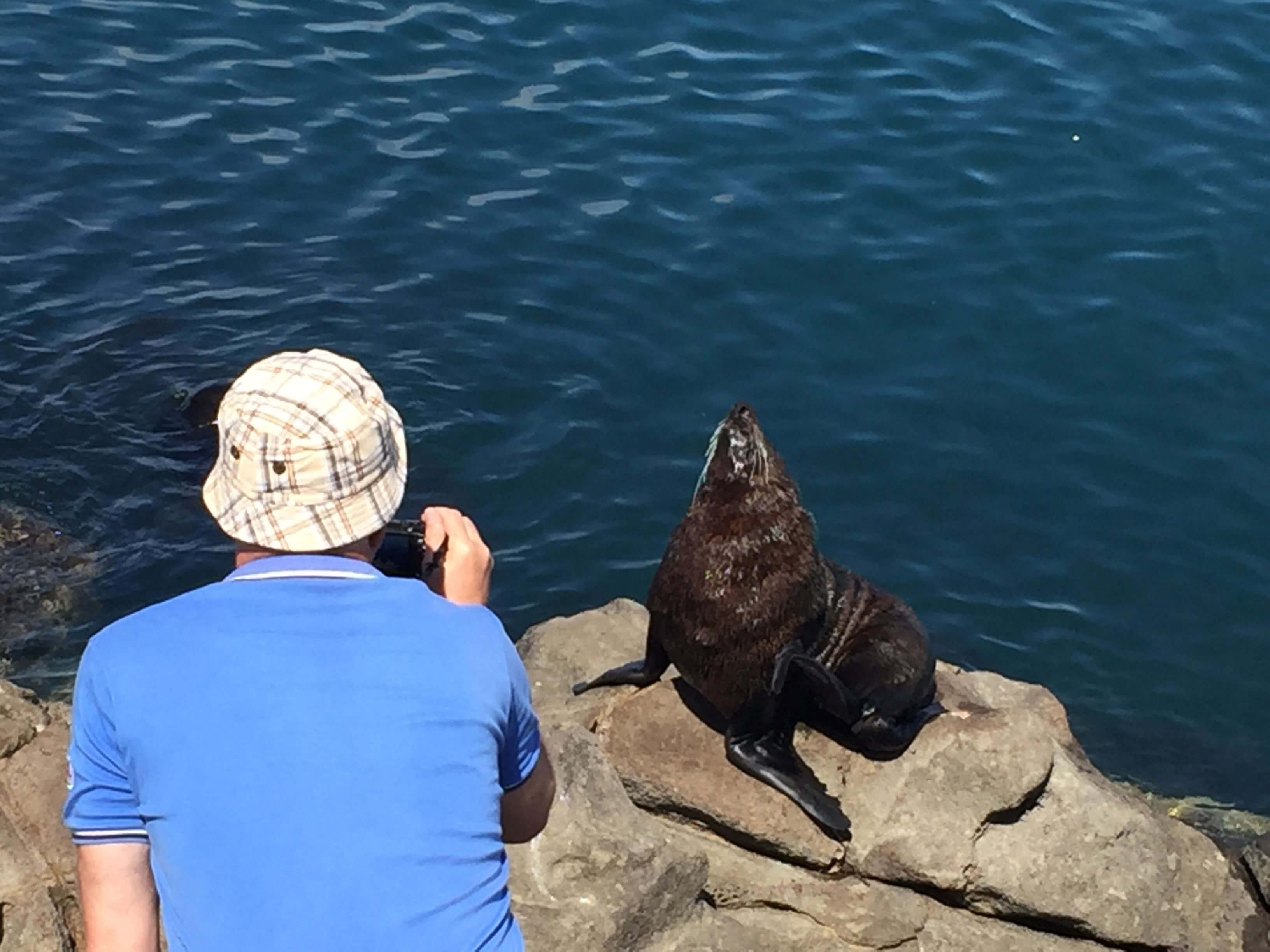Dunedin-Chalmers-port