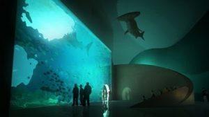 Посещение Национального аквариума Новой Зеландии