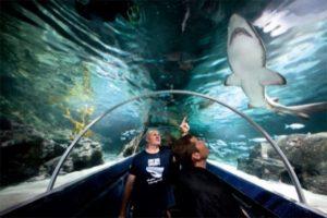 Экскурсия в Подводный мир