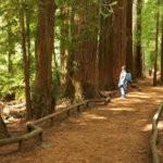 Красный лес Роторуа