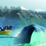 Кайкоура. Круиз в поисках китов