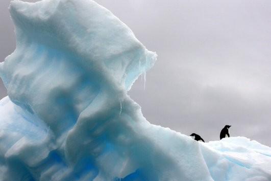 Туры в Антарктику