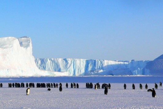 Антарктика 13 дней