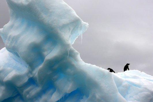 Антарктика 20 дней