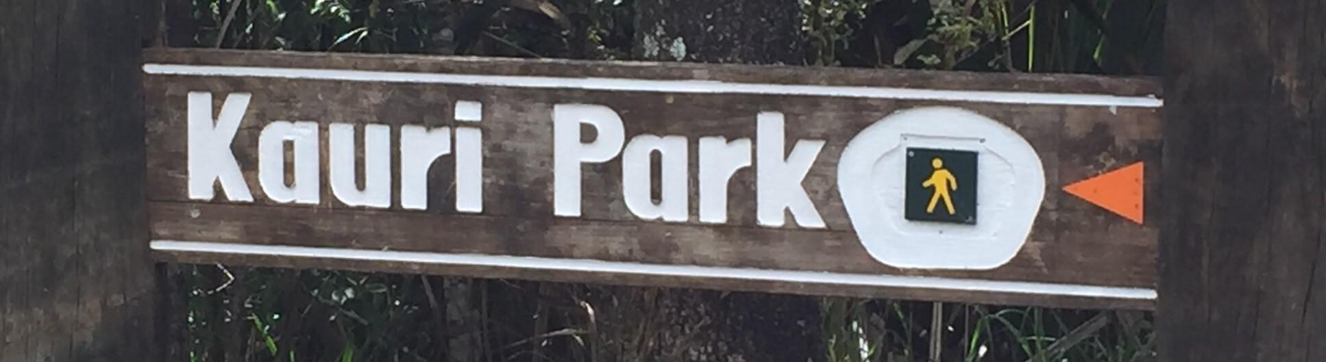 Новая Экскурсия из Окленда в древние леса Каури